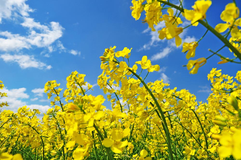 春は、肌にとって一番気をつけたい季節