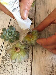 スタイリッシュ!サキュレント(多肉植物)のフラワーアレンジメント