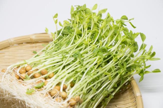 美肌も老化防止にも!もっと知りたい!発芽野菜「スプラウト」