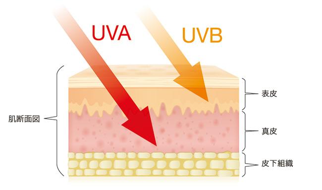 紫外線対策で一年中美肌キープ!生活習慣改善でUVケア