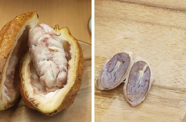 媚薬効果があり?!不思議な果実「カカオ」から作られる「チョコレート」