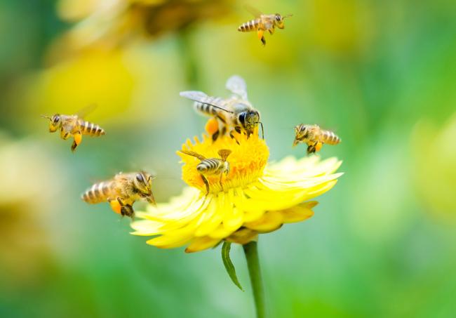 """花粉の季節こそ話題にしたい!""""ビーポーレン(蜂の花粉)""""の楽しみ方【前編】"""