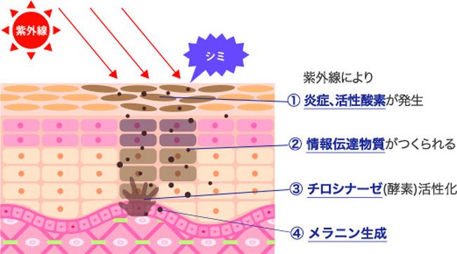 紫外線・シミ・くすみ対策を徹底解説!VOL.1インナービューティ編